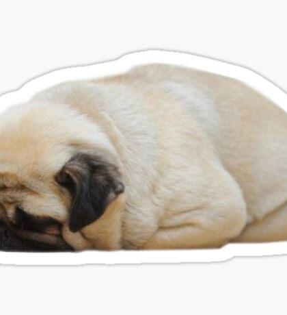 sleepy pug Sticker