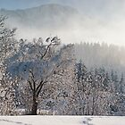 Frosty Winter Day by Kasia-D