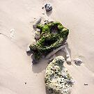Sea Bones  by ArtbyDigman