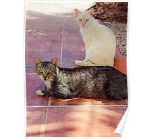 Kitty cat eyes. Poster