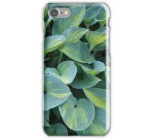 Tropical hosta plant iPhone Case/Skin