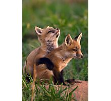 Fox Cub Buddies Photographic Print