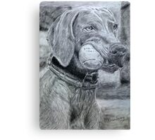 Dog with Ball Graphite Canvas Print