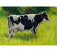 Holstein Dairy Cow in Oil Pastel No. 2 Photographic Print