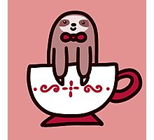 Teacup Sloth Photographic Print