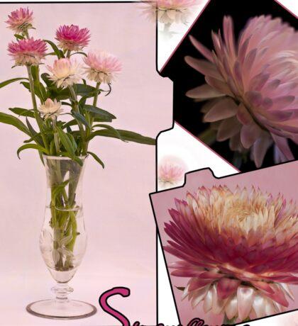 Photo Collage Of Strawflowers Sticker