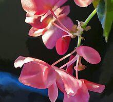 Winter Begonia by Eileen McVey