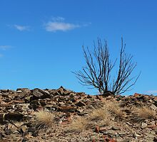 Lone Tree at Burra by myraj