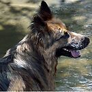 A wet dog is a happy dog.......! by Roy  Massicks
