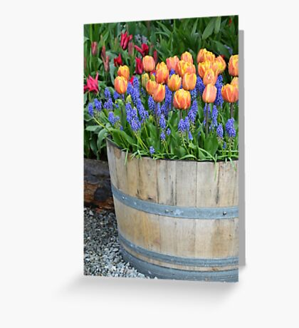 Colorful tulips barrel Greeting Card