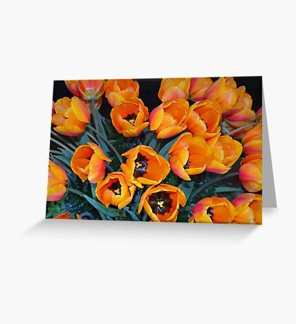 Orange spring tulips Greeting Card