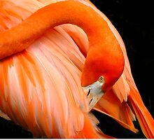The Flamingo by RickDavis