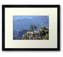 Tree in grand canyon Framed Print