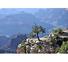 Tree in grand canyon Photographic Print