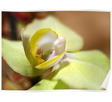 Green and Yellow Orchid Poster