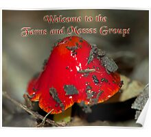 NOT FOR SALE - Welcome to Ferns & Mosses Banner Poster