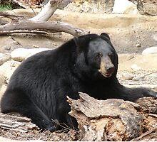 """""""Black Bear"""" by Carter L. Shepard""""  by echoesofheaven"""
