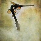 Rain Washing Dragonfly by Sunshinesmile83