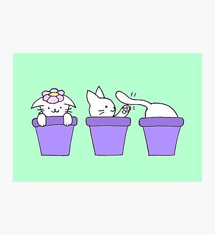 Cat Plants Photographic Print