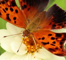 Question Mark Butterfly on Flower Sticker