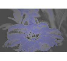 Bloom in Neon Blue Photographic Print