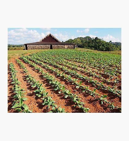 Viñales Tobacco Farm Photographic Print