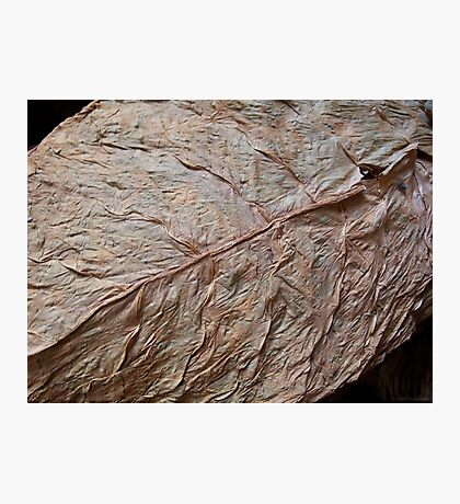 Detail, Tobacco Leaf Photographic Print