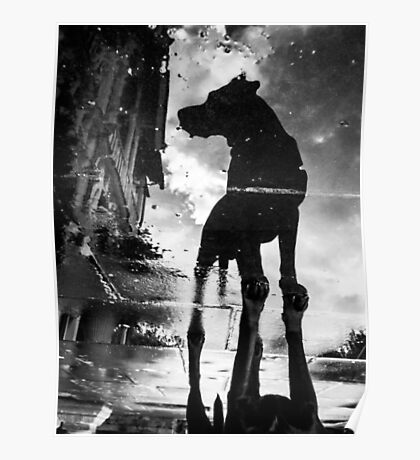 My #dog filby reflected in a puddle today taken on my #galaxynexus Poster