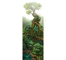 Cyanide Tree Photographic Print