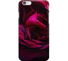 English David Austin Rose Munstead Wood iPhone Case/Skin