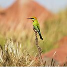 Rainbow Bee Eater 2 by mncphotography