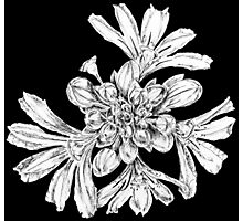 Fan flower 1 Photographic Print