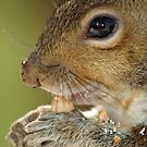 Oh yum - that peanut is mighty fine !  by Bine