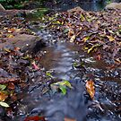 Leaf Stream by Penny Kittel
