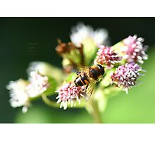 """ Nectar Stripes "" Photographic Print"