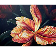 red tulip open blossom painting Photographic Print