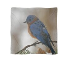 Eastern Bluebird Scarf