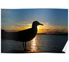 Sunset Seagull  Poster