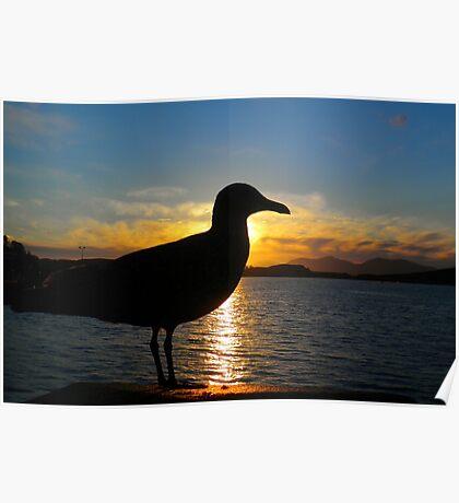 Sunset Seagull  Poster