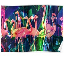 Flamingo Dance Poster