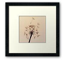 Dandelion sketch Framed Print