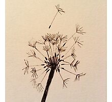 Dandelion sketch Photographic Print