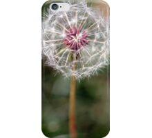 Dandelion Seed Head iPhone Case/Skin