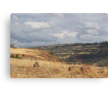 Upper Bidwell trail - Chico, CA Canvas Print