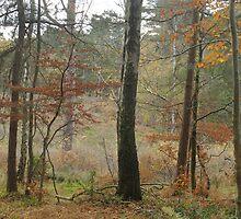 Autumn colour by miradorpictures