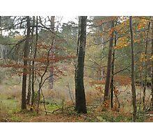 Autumn colour Photographic Print