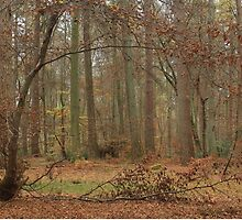 Autumn at Thetford by miradorpictures