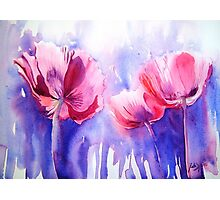 Pink Poppy Explosion Photographic Print