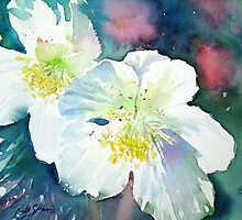 White Hellebore by Ruth S Harris