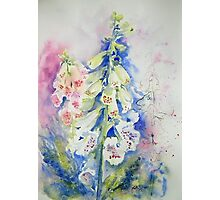 Foxglove Summer Photographic Print